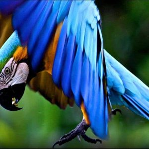 Tambopata best Peru amazon tours 2 Days