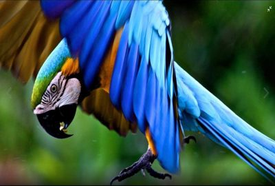Macaw clay lick best Peru amazon tours 2 Days