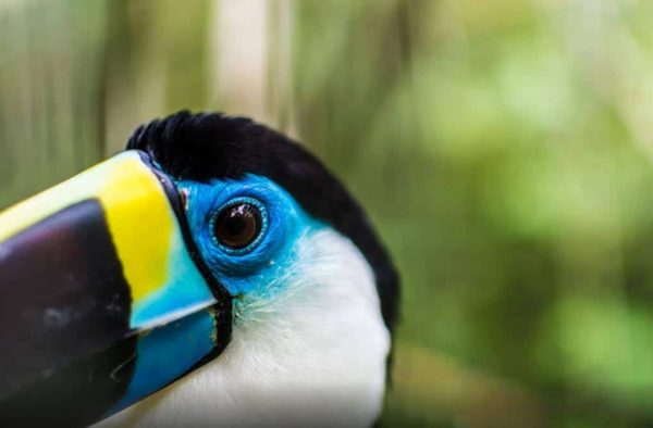 Peru Amazon Jungle tours