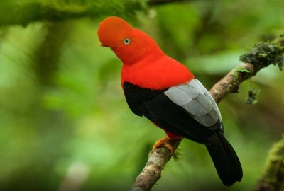 Manu reserve + Pakitza Amazon jungle tours 5 Days