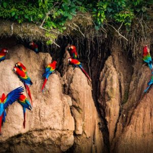 Tambopata Peru jungle tours 3 Days